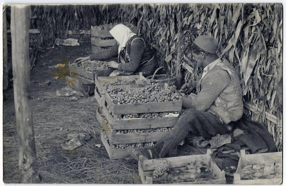 Vinarija Arsenijević tradicija slika