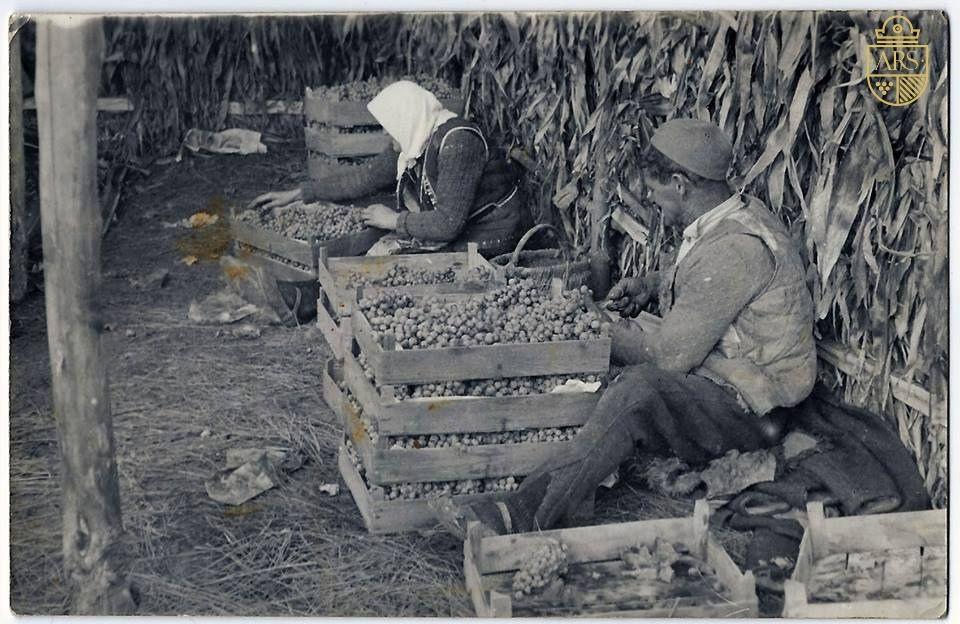 Vinarija Arsenijević ima dugu tradiciju proizvodnje vina, stara slika porodice